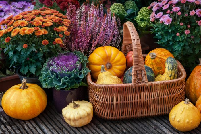 Basket filled with pumpkins while being surrounded by fall flowers, like mums